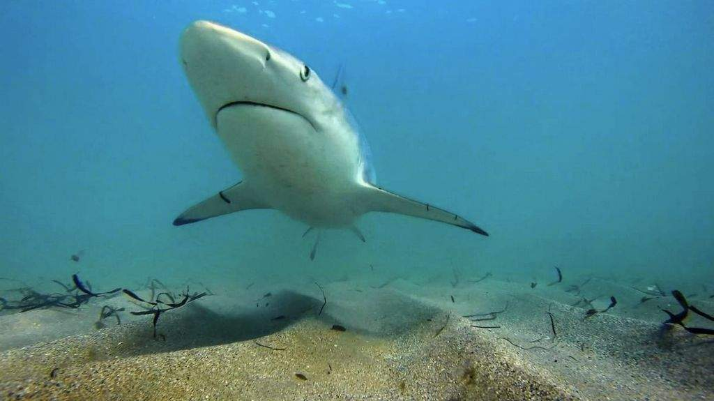 No more chumming? Florida considers restrictions on shark