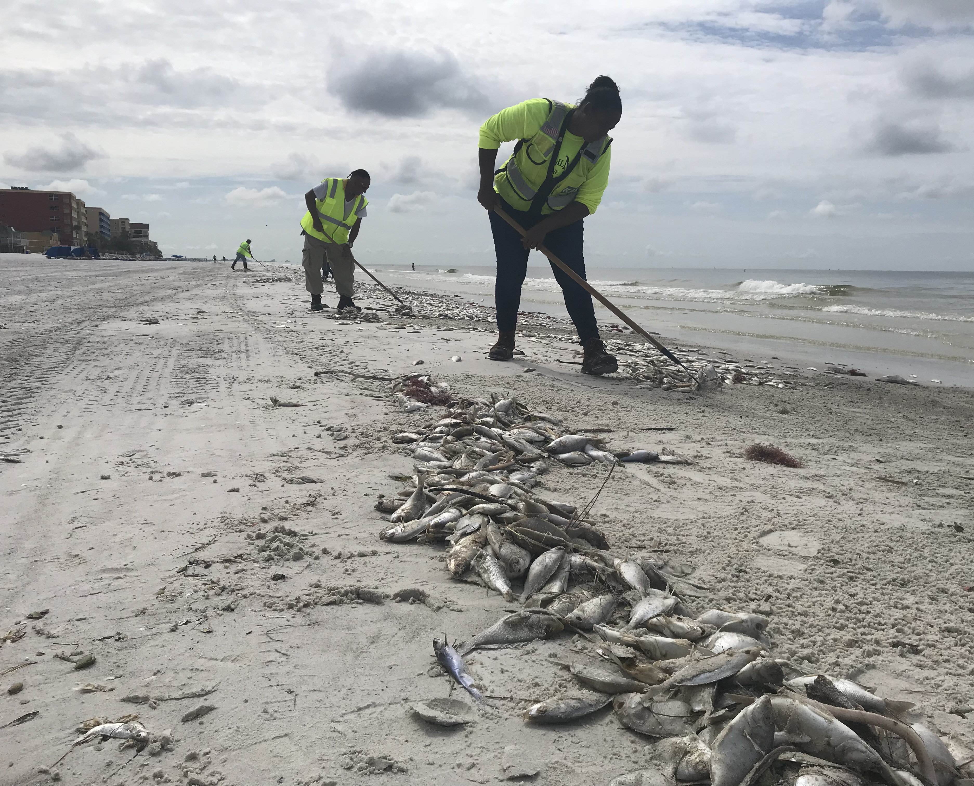 Sights And Sounds As Red Tide Fouls Pinellas County Beaches