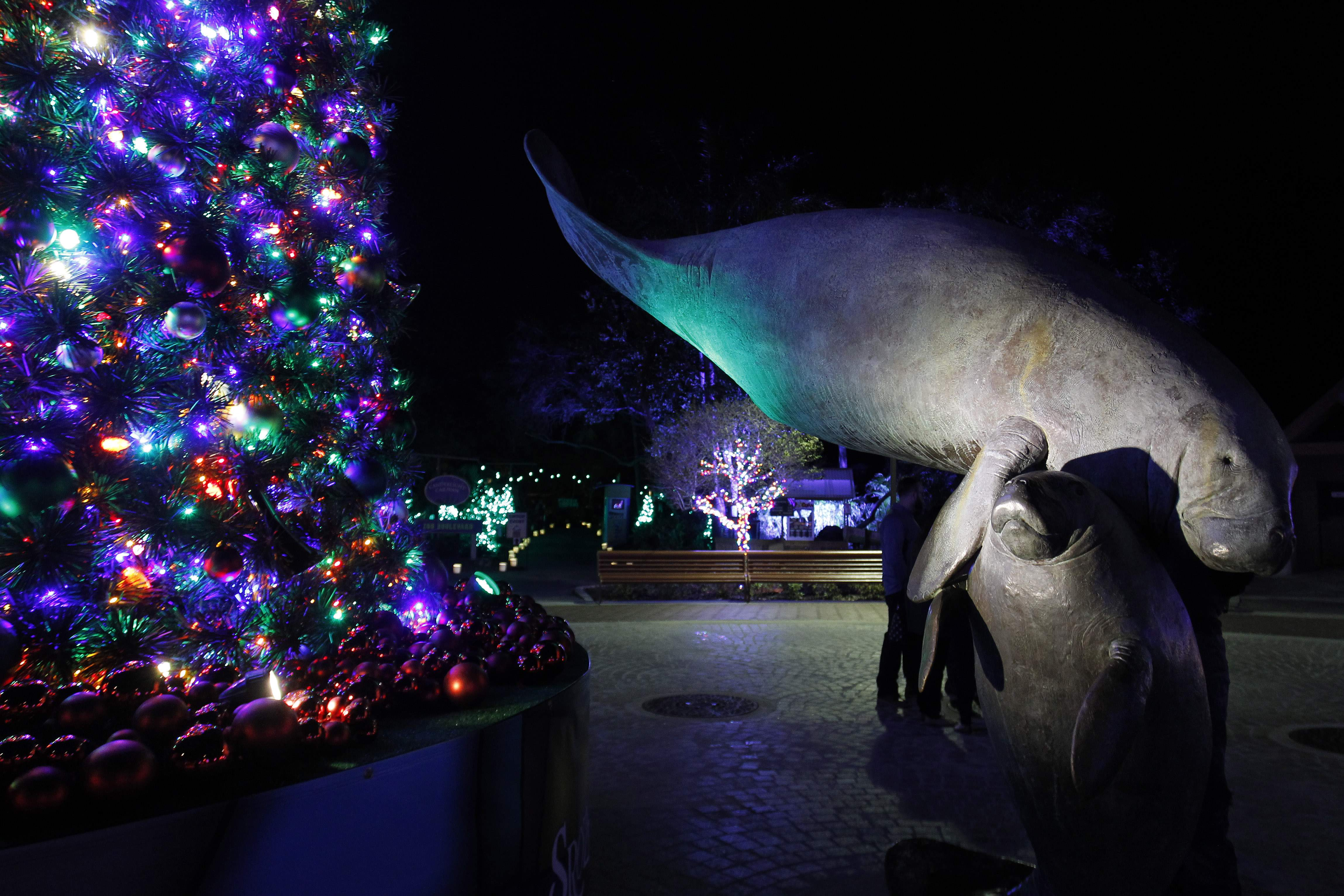 Lowry Park Zoo Christmas.Plan Your Weekend Indie Shopping Lindsey Stirling Ice