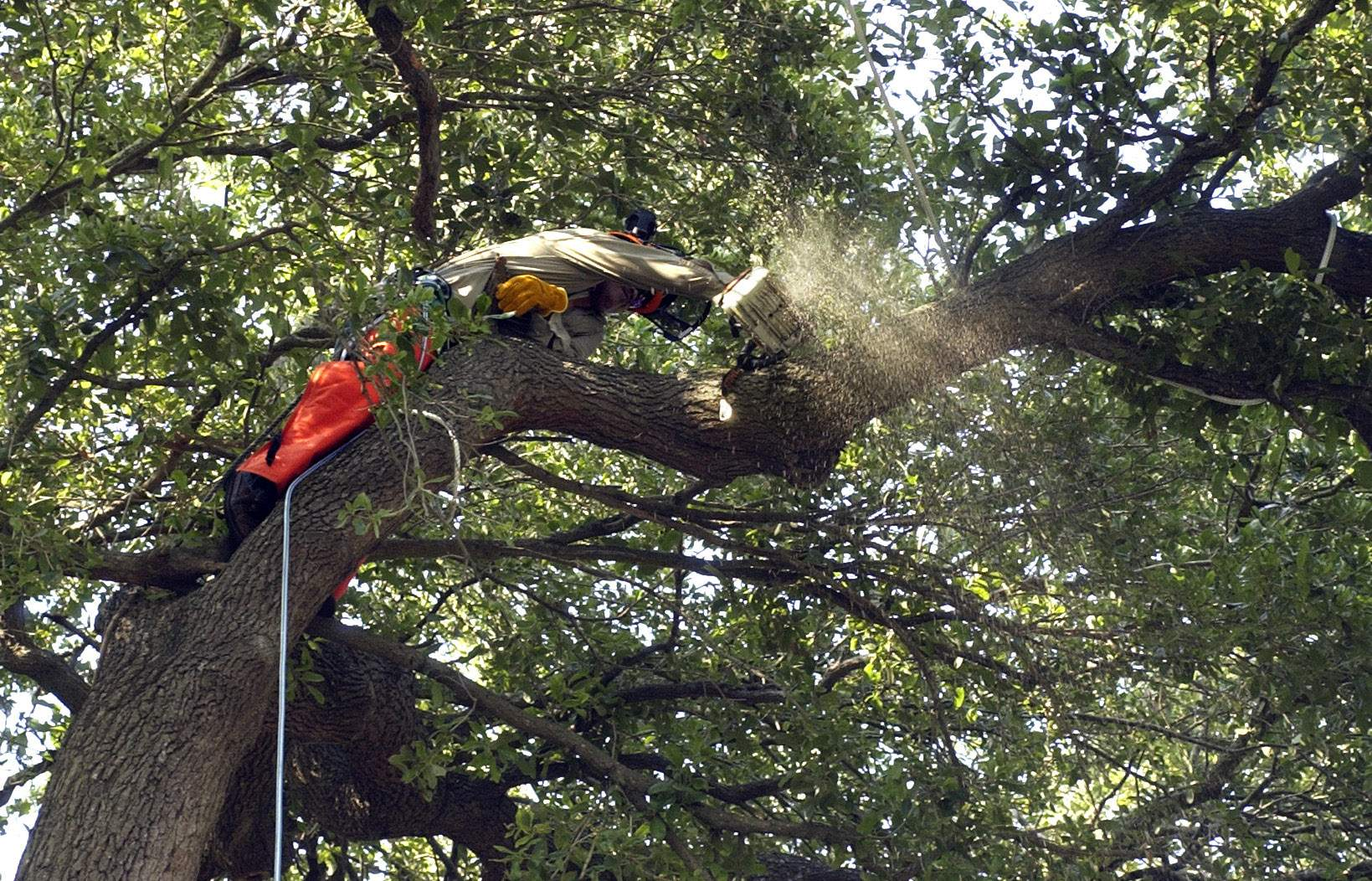 Tampa's new tree ordinance marks a compromise between