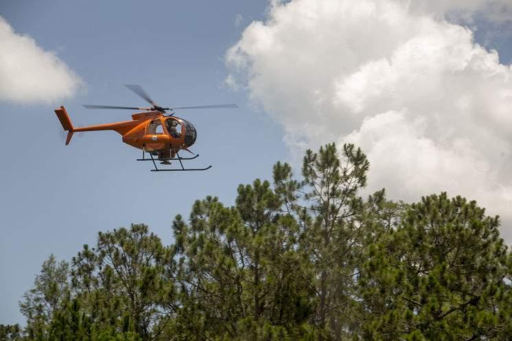 Vicious salt marsh mosquito chasing Tampa Bay indoors