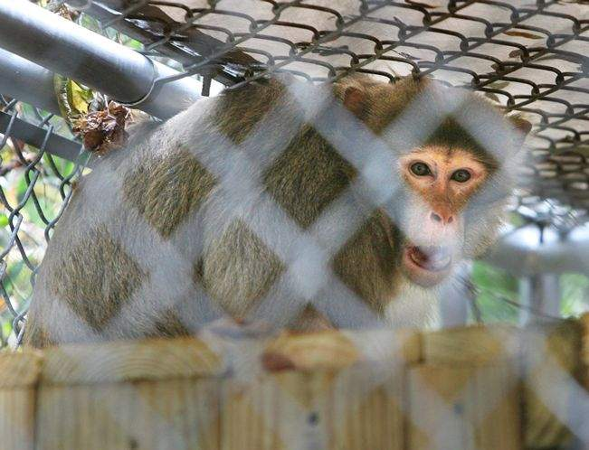 Mystery Monkey taken to new home, a zoo in Dade City