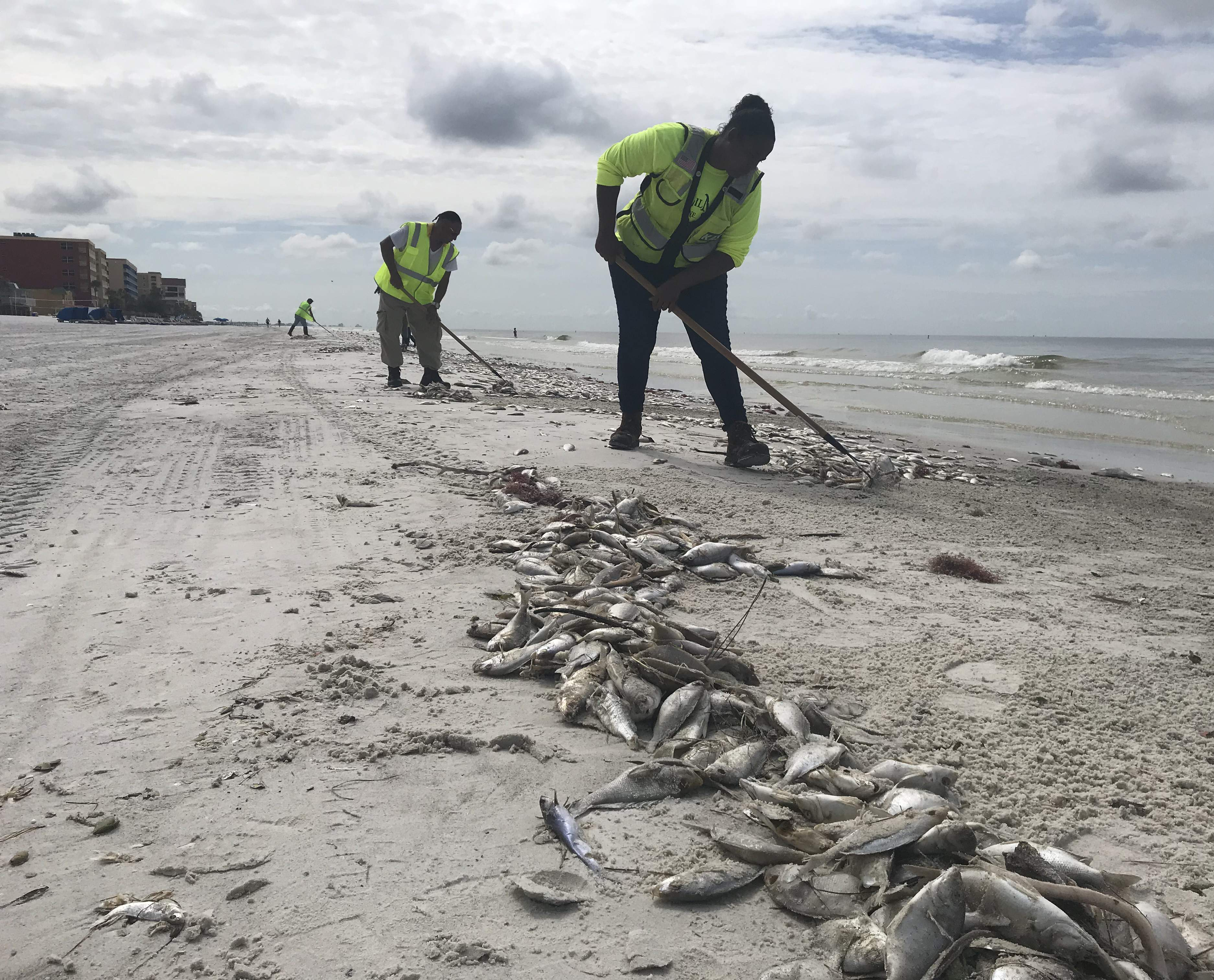 When will Red Tide on Florida's west coast go away? It's