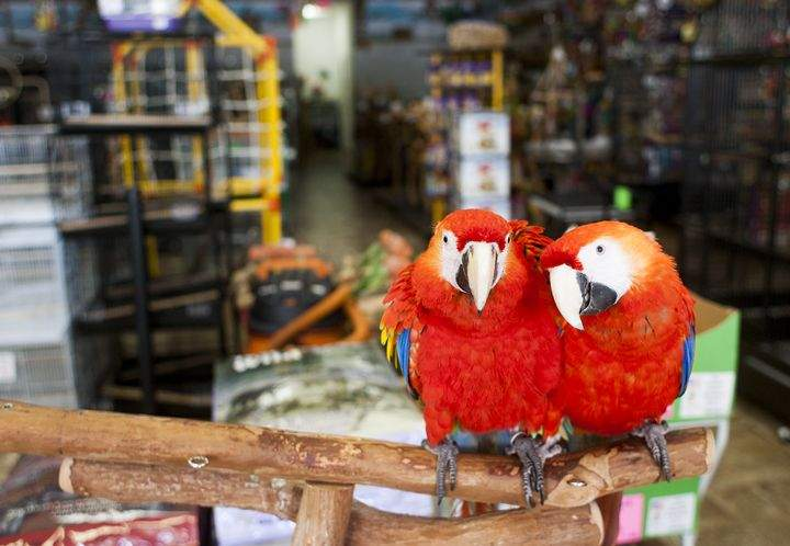 Quality Exotic Birds offers smart companions, plus seed, toys