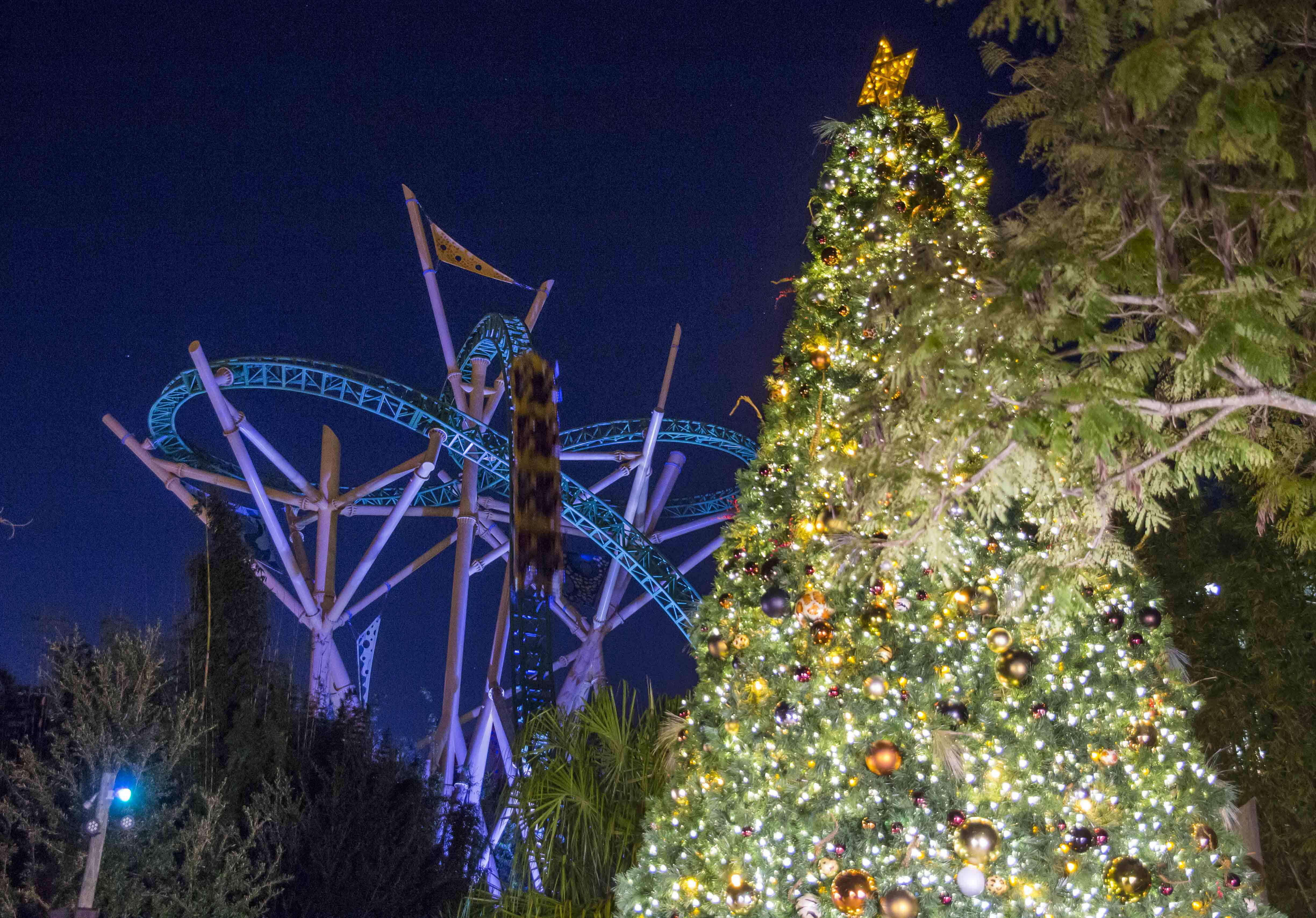 Lowry Park Zoo Christmas.This Week S Top Holiday Events Parades Christmas Lights