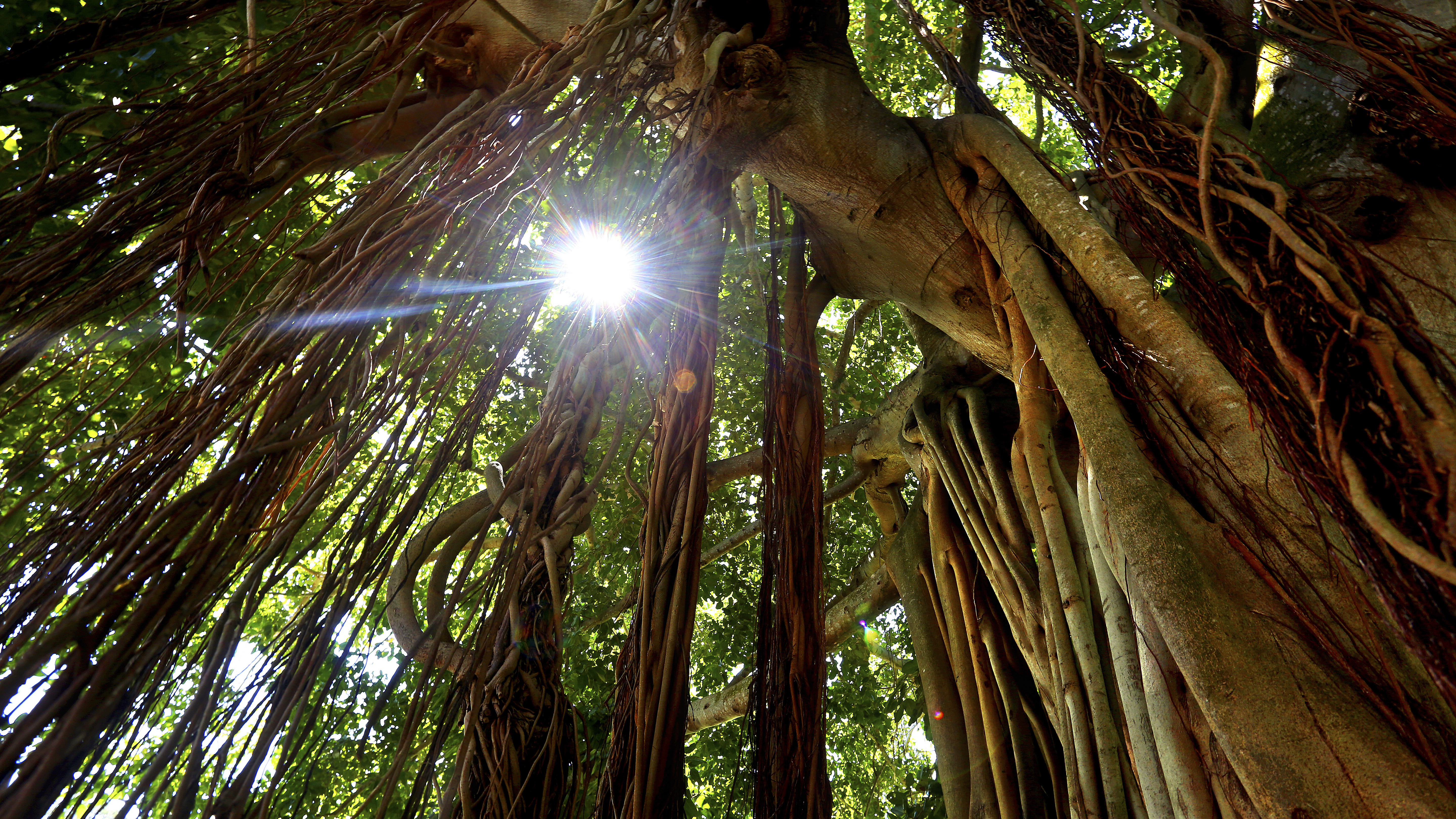 Happy Arbor Day Let S Take A Walk Around Our Favorite Tampa Bay