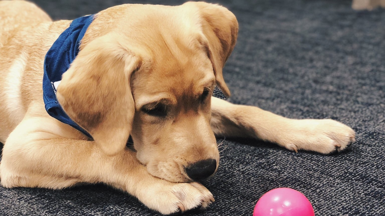 The Lightning's new pup is more than just a photo op prop
