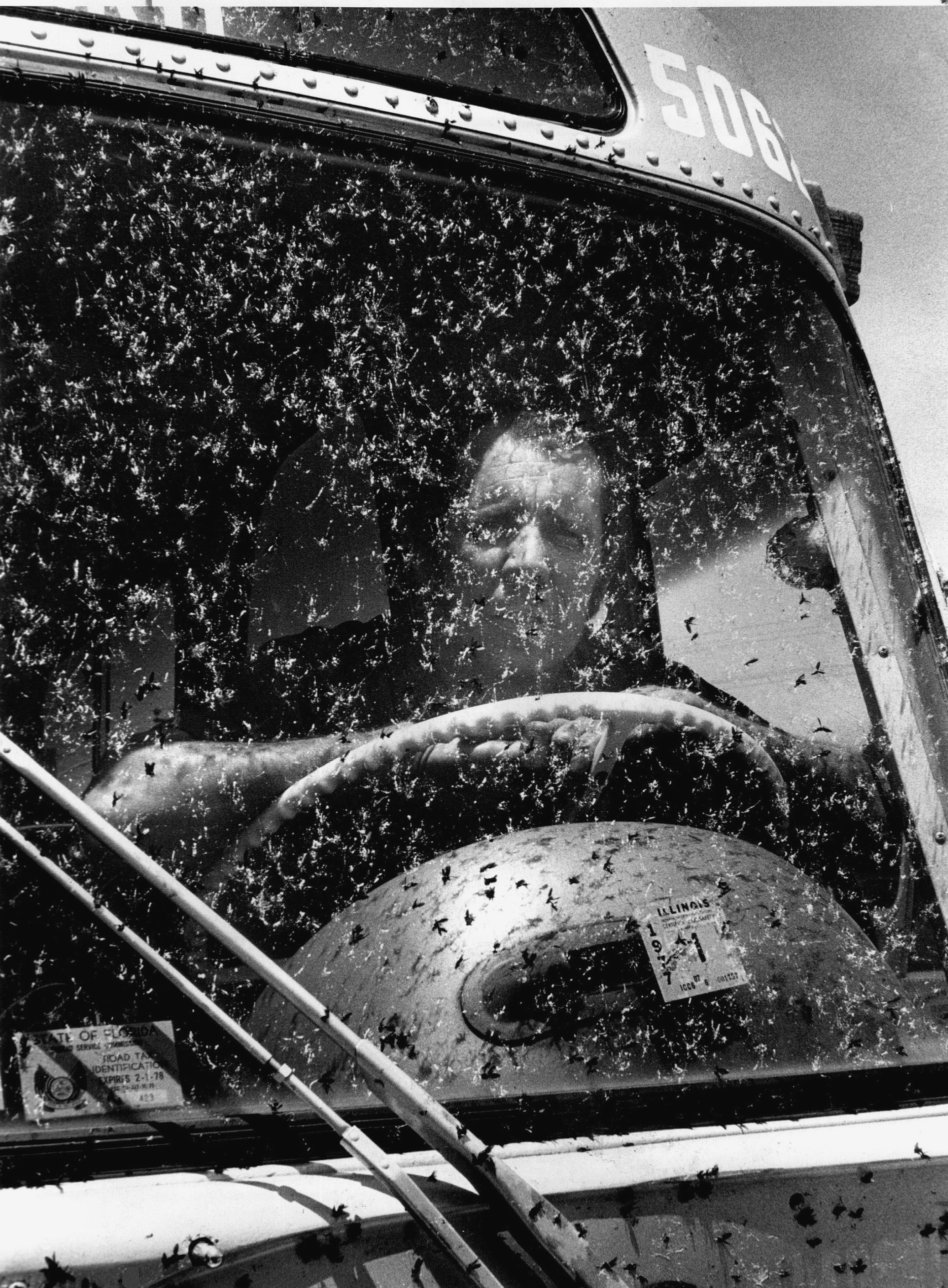 Think lovebugs are bad now? They once caused a public safety