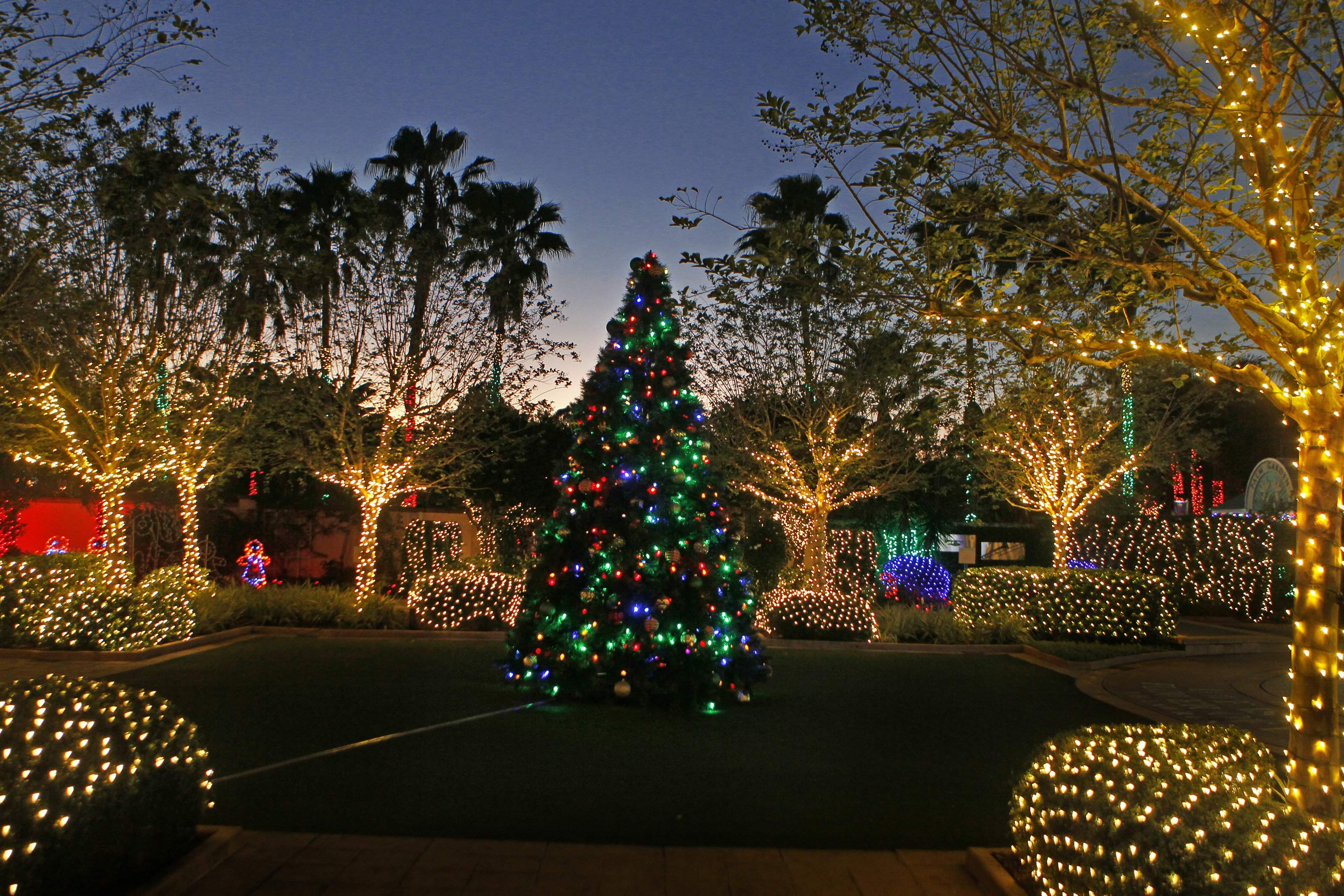 Lights Of Christmas.Here S Where To See Christmas Lights In Tampa Bay