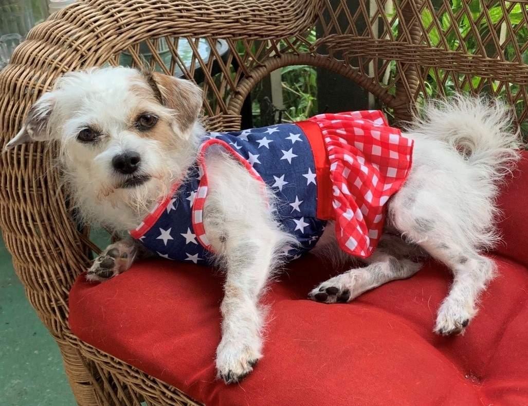 Find a friend: Luna the Cairn terrier mix